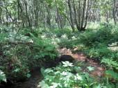 森の川遊び